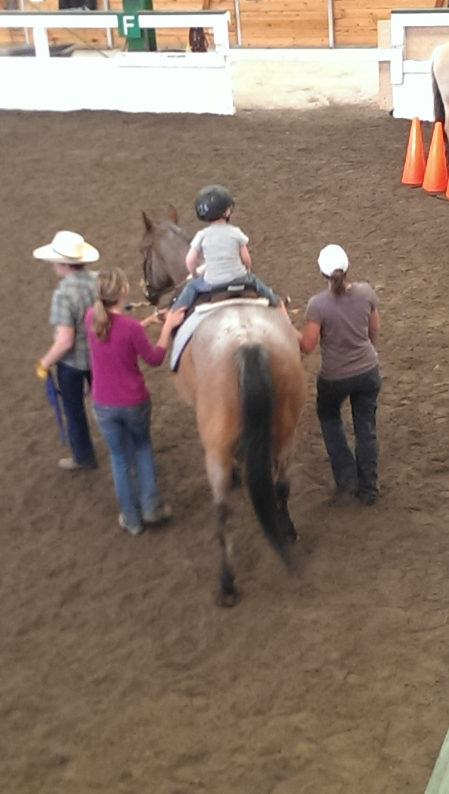 Healing Reins Hippotherapy