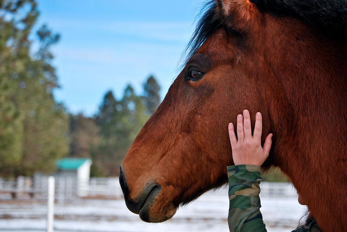Petting horse at Healing Reins