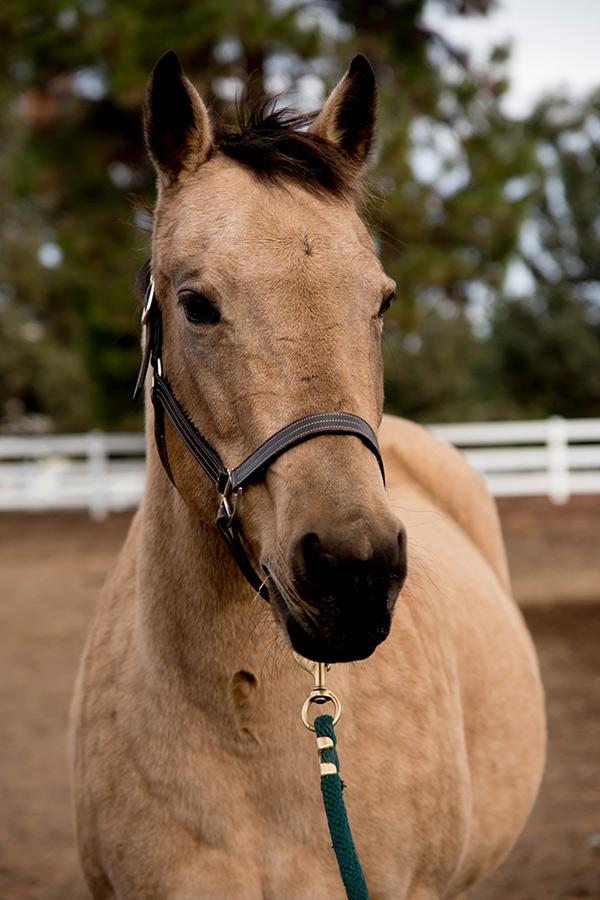 Maleah - Quarter Horse