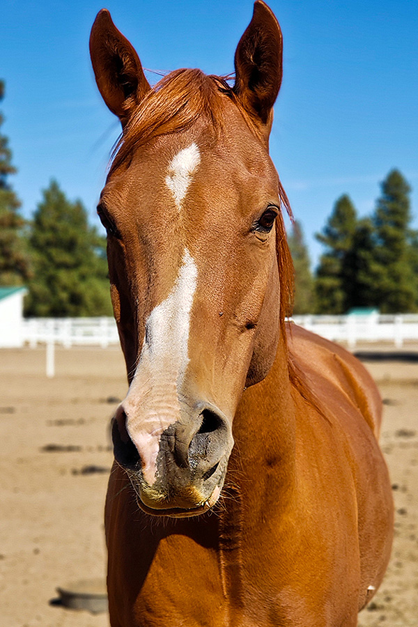 QD - therapy horse