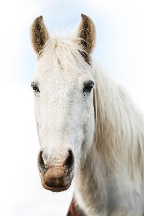Raz - Kentucky Mountain Therapy Horse
